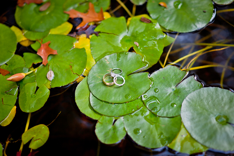 Creative wedding ring pictures